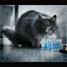 Starptautiskā kaķu diena